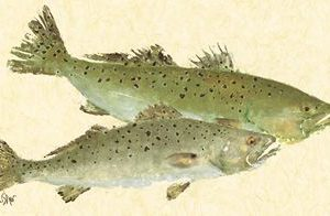 Synchronized Seatrout