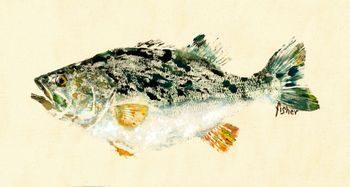 Unlucky – Largemouth Bass