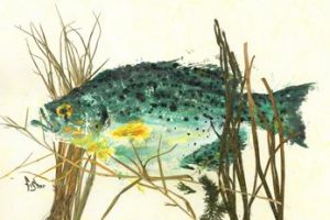 Water Garden – Speckled Perch