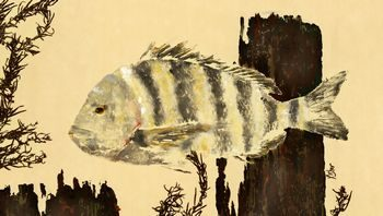 Deep Cover – Sheepshead