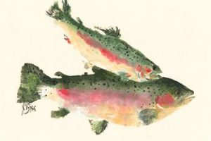 Over the Rainbow – Rainbow Trout