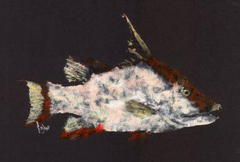 Diver's Choice – Hogfish