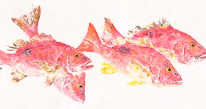 In the Pink – Lane Snappers