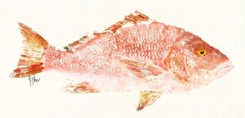 Rosy – Red Snapper