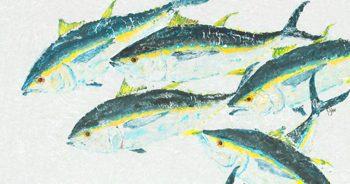 Schooling Tuna